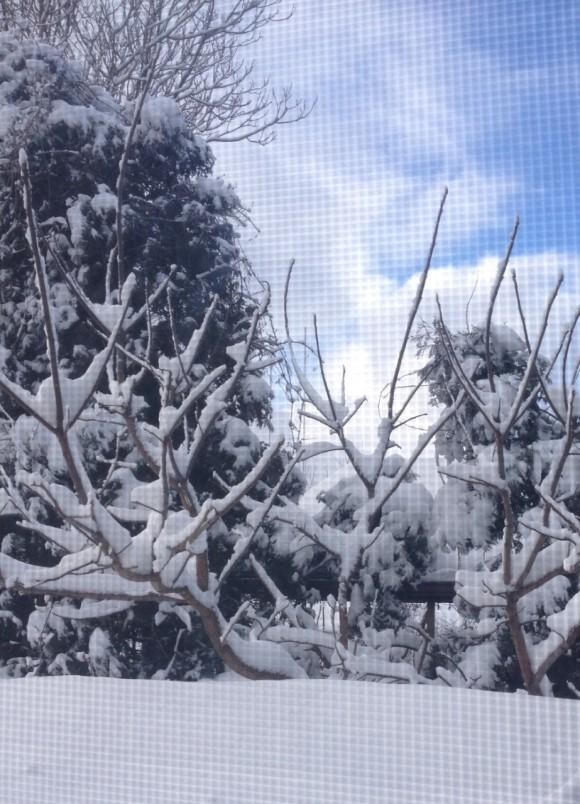 snow-kitchen-window